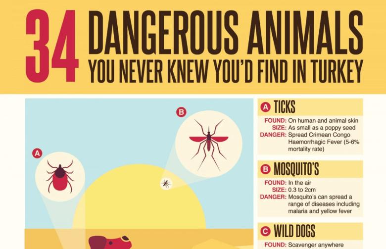 Dangerous Animals in Turkey