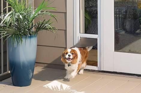 What Pet Door Size Should You Buy? 1